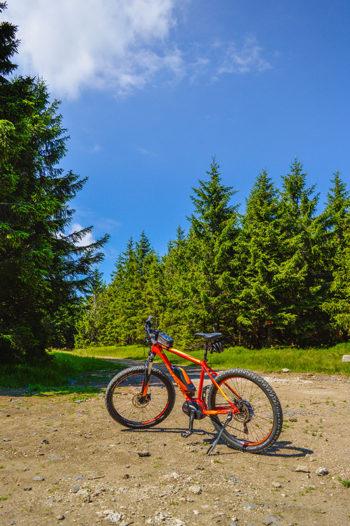 Pomarańczowy rower - Focus na górskiej trasie. W tle widoczne są drzewa iglaste, w które prowadzi ścieżka.
